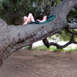 Leo Carrillo Tree Sleeper